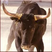 Bill Rodeo Bull Matador icon