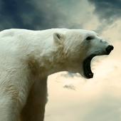 polar bear wallpaper live icon