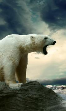 polar bear wallpaper live poster