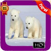 Polar Bear Photo Frames icon
