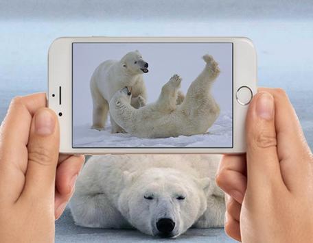 Polar Bear Photo Frames poster