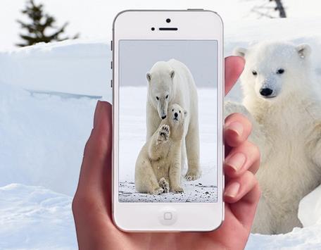 Polar Bear Photo Frames screenshot 1