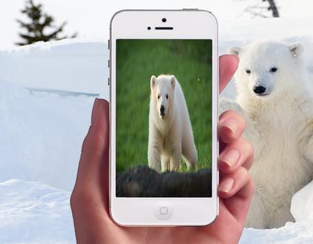 Polar Bear Wallpapers screenshot 1