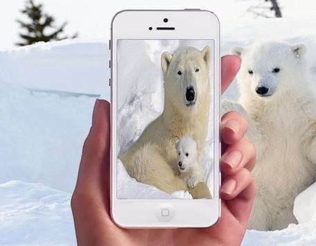 Polar Bear Wallpapers apk screenshot