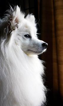 Pomeranian Wallpaper screenshot 9
