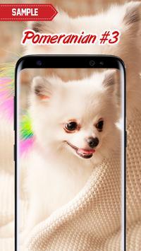 Pomeranian Wallpaper screenshot 3