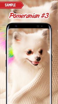 Pomeranian Wallpaper screenshot 11