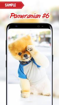 Pomeranian Wallpaper screenshot 14