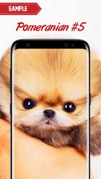 Pomeranian Wallpaper screenshot 5