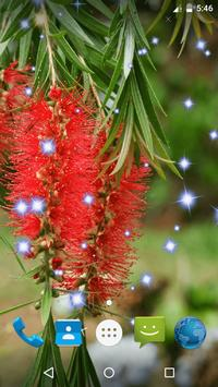 Bottlebrush Live Wallpaper screenshot 1