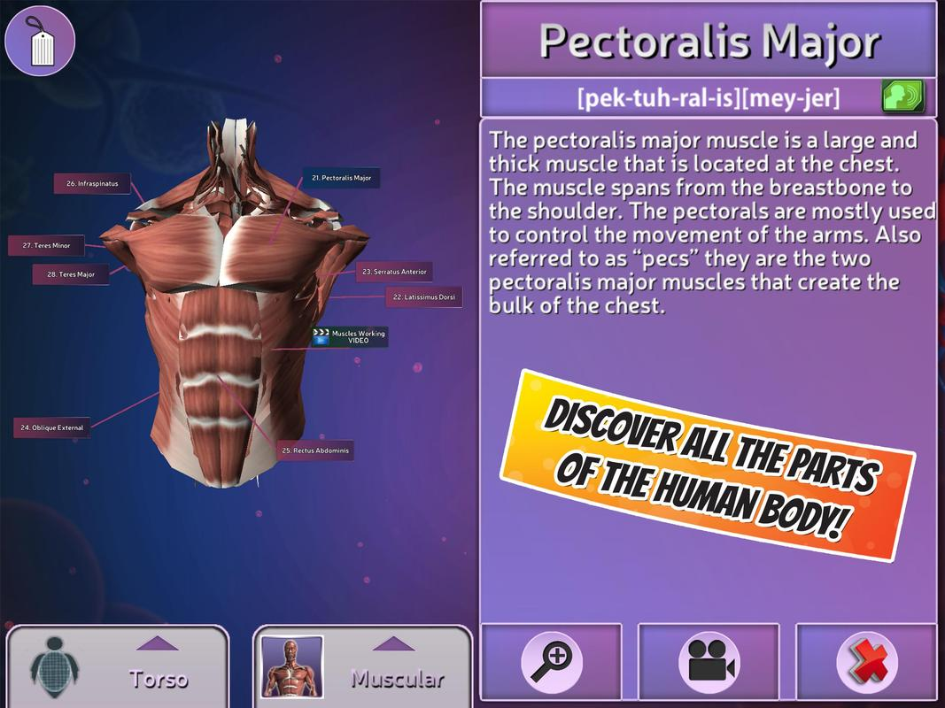 Popar Human Anatomy APK Download - Free Entertainment APP for ...