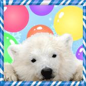 Polar Pop Bubble icon