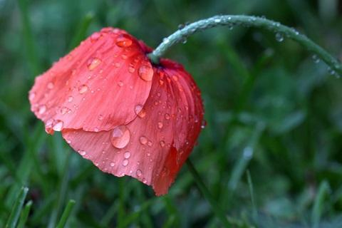 Rain Flower Wallpaper For Android Apk Download
