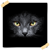 Wildcat HD Wallpaper icon