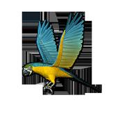 Birds LiveWallpaper icon