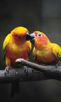 Birds LiveWallpaper poster