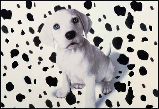 Jigsaw Dogs Puzzle Puppies screenshot 2