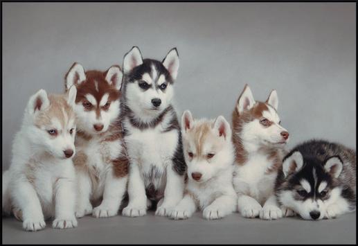 Jigsaw Dogs Puzzle Puppies screenshot 5