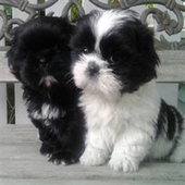 IZABIS | Cute Puppy Pictures icon