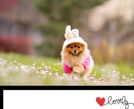 Cutest Dogs apk screenshot