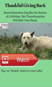 Posh Pet World apk screenshot