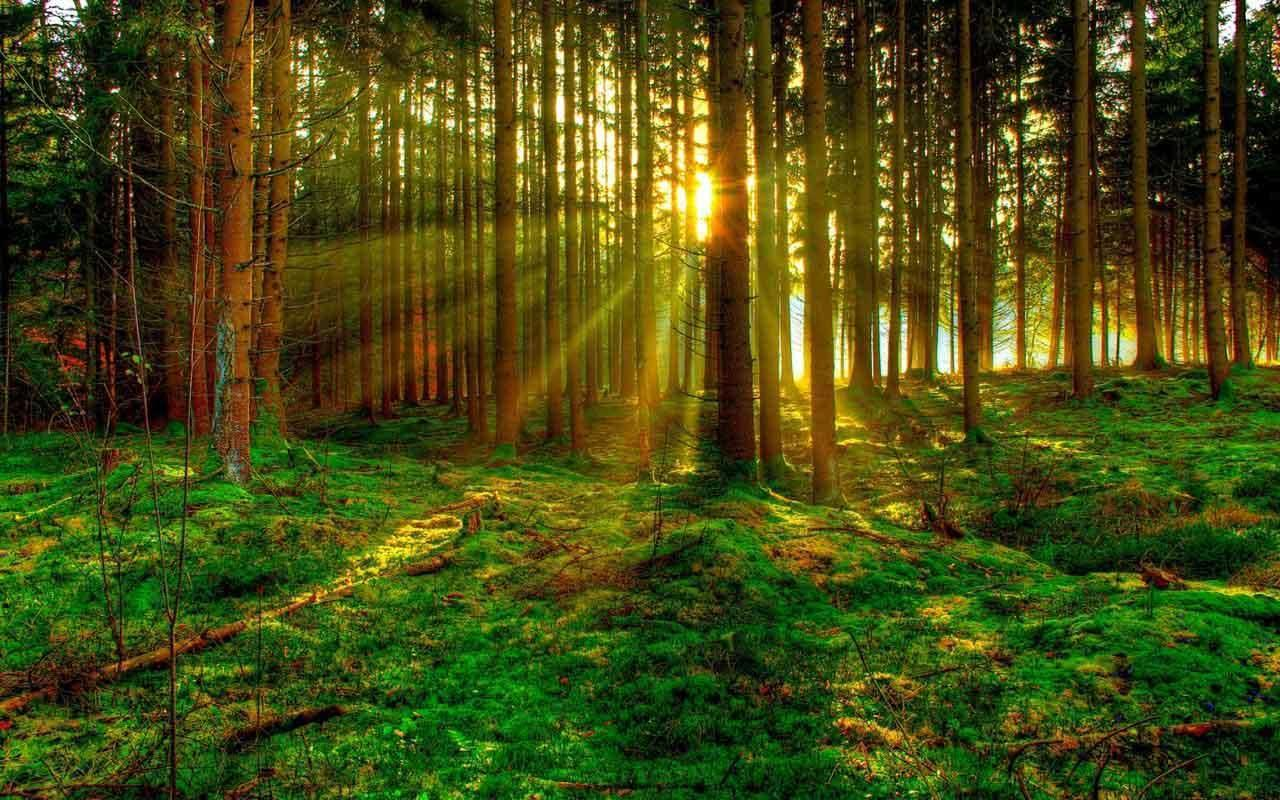 Green Forest Wallpaper For Android Apk Download