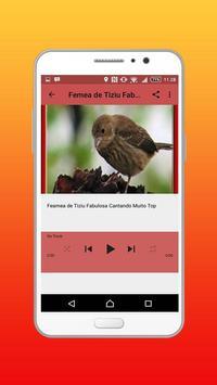Canto Fêmea De Tiziu Offline screenshot 4