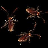 Bug Smash icon