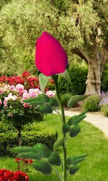 Rose Blooming Live Wallpaper screenshot 1