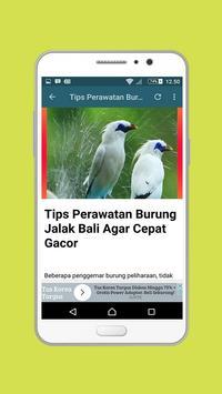 Master Jalak Bali Mp3 apk screenshot