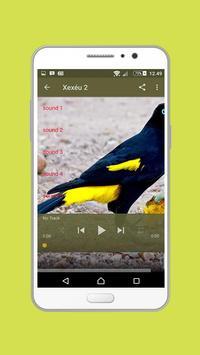Canto de Xexéu Mp3 screenshot 1