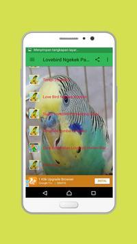 Lovebird Ngekek Panjang poster