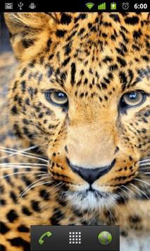 pretty cheetah wallpaper apk screenshot