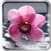 Flowers Bloom icon