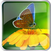 Butterfly in the garden icon