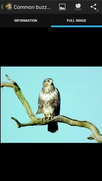 Birds of prey screenshot 10
