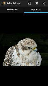 Birds of prey screenshot 6