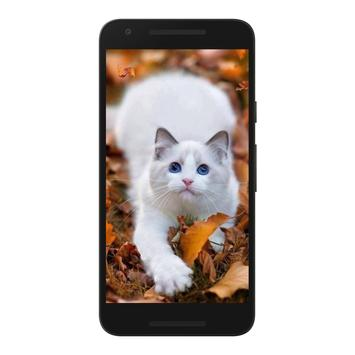 Cats Wallpapers 4K HD screenshot 2