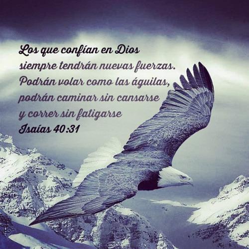 Oraciones Palabra De Dios For Android Apk Download