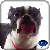 Cute dog licking screen icon
