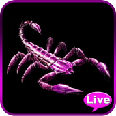 Scorpion Animated Wallpaper icon