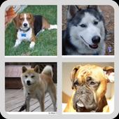 Perros - Quiz acerca de todas las razas populares icon