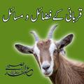 Eid Ul Adha Qurbani Guide Fazail O Masail