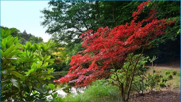 Nature Nice Wallpapers apk screenshot