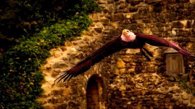 Eagle Bird Wallpaper screenshot 6