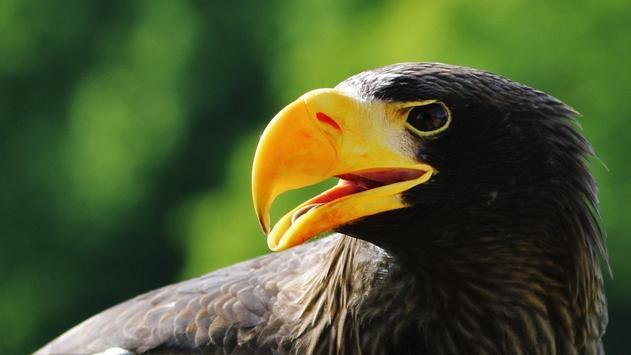 Eagle Bird Wallpaper screenshot 2