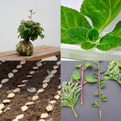 Plant Nursery icon