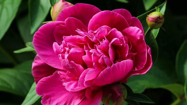 Flower Blossom Wallpaper poster
