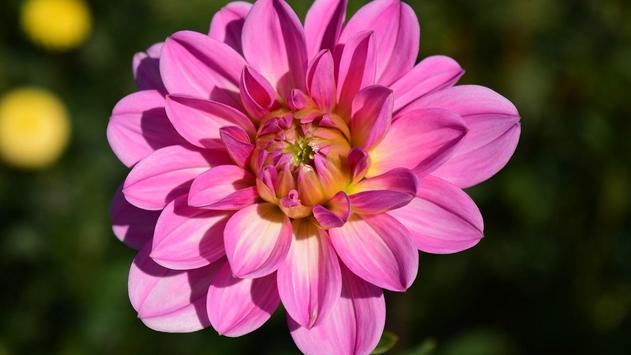 Flower Blossom Wallpaper apk screenshot