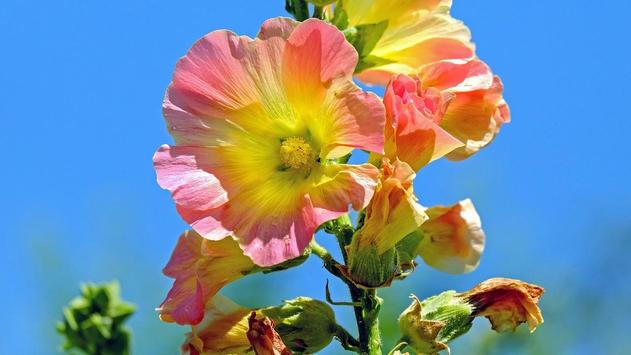 Flowers Wallpaper apk screenshot